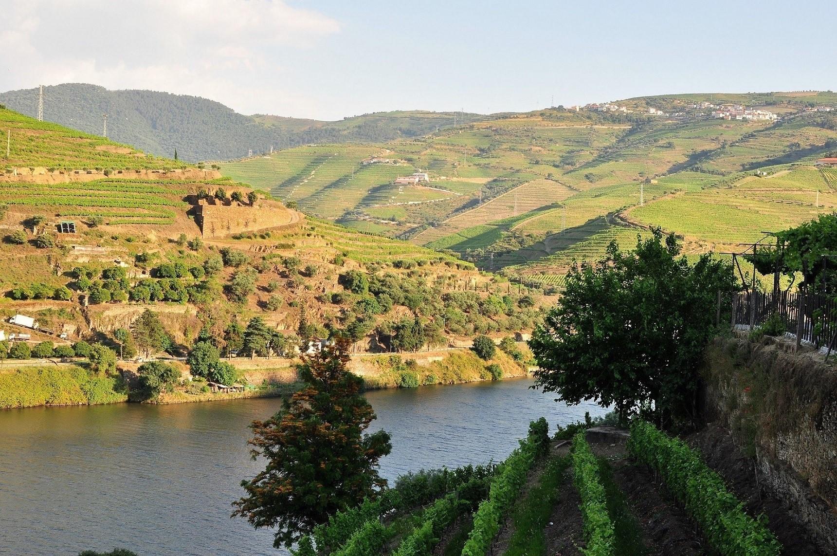 Vallee du Douro avec ses vignes - region de Porto